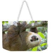 Hoffmanns Two-toed Sloth Choloepus Weekender Tote Bag