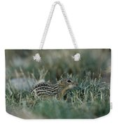 A 13-lined Ground Squirrel At The Henry Weekender Tote Bag