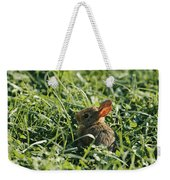 A Baby Cottontail Rabbit Sits Among Weekender Tote Bag