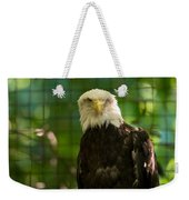 A Bald Eagle At The Lincoln Zoo Weekender Tote Bag