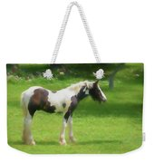 A Beautiful Young Gypsy Vanner Standing In The Pasture Weekender Tote Bag