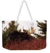A Big Fierce-eyed Bull Moose Weekender Tote Bag