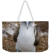 A Blue Footed Booby Looks At The Camera Weekender Tote Bag