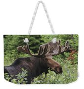 A Bull Moose Among Tall Bushes Weekender Tote Bag