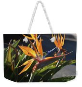 A Bunch Of Bird Of Paradise Flowers Bloomed  Weekender Tote Bag