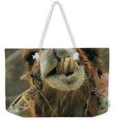 A Camel Displays Its Teeth Weekender Tote Bag