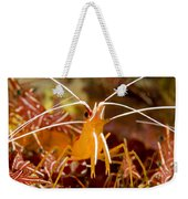 A Cleaner Shrimp Perches On An Exposed Weekender Tote Bag