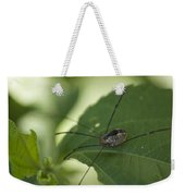 A Daddy Longlegs Spider Sits On A Leaf Weekender Tote Bag