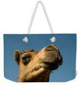 A Dromedary Camel At The Lincoln Weekender Tote Bag
