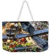 A Foraging Raccoon Weekender Tote Bag