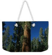 A Giant Sequoia Tree Towers Weekender Tote Bag