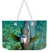A Gray Angelfish In The Shallow Waters Weekender Tote Bag by Michael Wood