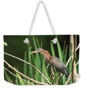A Green Heron Stalks Prey Weekender Tote Bag