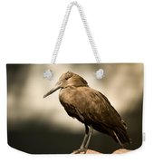 A Hammerkop At The Lincoln Childrens Weekender Tote Bag
