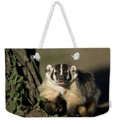 A Hand-raised Badger At The Home Weekender Tote Bag