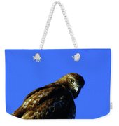 A Hawk Looking Back  Weekender Tote Bag
