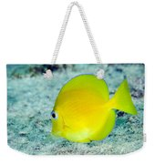 A Juvenile Blue Tang Searching Weekender Tote Bag by Terry Moore