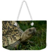 A Leopard Tortoise At The Lincoln Weekender Tote Bag
