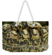 A Leopard Tortoise On The Move Weekender Tote Bag
