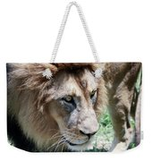 A Male Lion, Panthera Leo, King Of Beasts Weekender Tote Bag