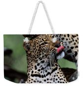 A Mother Leopard, Panthera Pardus Weekender Tote Bag
