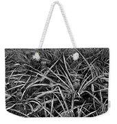A Pineapple Field Near Nassau, Bahamas, 1883 Weekender Tote Bag