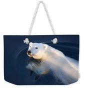 A Polar Bear Glance Weekender Tote Bag