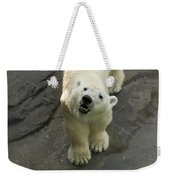 A Polar Bear Looks Up At Its Observers Weekender Tote Bag