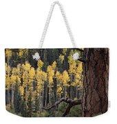 A Ponderosa Pine Tree Among Aspen Trees Weekender Tote Bag