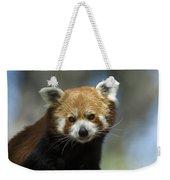 A Red Panda Ailurus Fulgens At Zoo Weekender Tote Bag