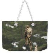 A Red-tailed Hawk Juvenile Weekender Tote Bag