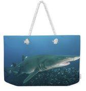 A Sand Tiger Shark Above A School Weekender Tote Bag
