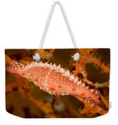 A Spindle Cowrie Snailphenacovolva Sp Weekender Tote Bag