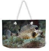 A Spotted Trunkfish, Key Largo, Florida Weekender Tote Bag