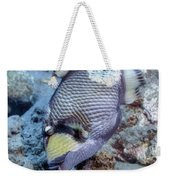 A Titan Triggerfish Faces Weekender Tote Bag