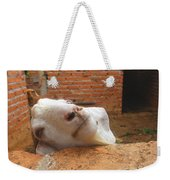 A Visit With A Smiling Goat Weekender Tote Bag