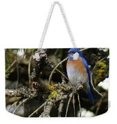 A Western Bluebird In A Tree Weekender Tote Bag