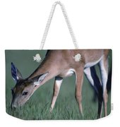 A White-tail Deer Munches On Some Green Weekender Tote Bag