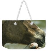 A Wild Pony Foal Nuzzling Its Mother Weekender Tote Bag