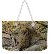 A Yawning Lion Weekender Tote Bag