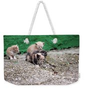 Abandoned Kittens On The Street Weekender Tote Bag