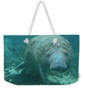 About To Meet A Manatee Weekender Tote Bag