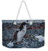 Adelie Penguin Chick Running Along Stony Beach Weekender Tote Bag