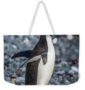 Adelie Penguin Squawking On Grey Shingle Beach Weekender Tote Bag