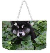 Adorable Alusky Puppy Hiding In A Garden Weekender Tote Bag