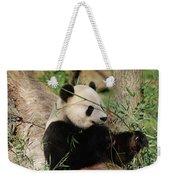 Adorable Giant Panda Bear Eating Bamboo Shoots Weekender Tote Bag