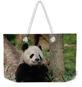 Adorable Giant Panda Eating A Shoot Of Bamboo Weekender Tote Bag