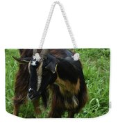 Adorable Goat In A Field With Thick Green Grass Weekender Tote Bag