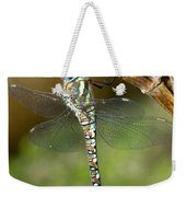 Aeshna Mixta Dragonfly Weekender Tote Bag