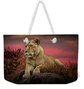 African Female Lion In The Grass At Sunset Weekender Tote Bag